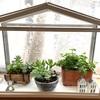 IKEAで買ったミニ温室(ソッケル)で猫がいても部屋に植物が置ける!