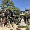 蓮光寺にあります広島県天然記念物の「長束の蓮華松」です。