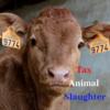 世界初!オランダで食肉税導入の兆し/屠殺に課税を (Tax Animal Slaughter)