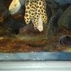 おたる水族館 ― ウツボと海獣 etc. ―