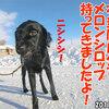 ココ姉ちゃんメモリー2(2013年06月20日誕生日)