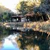 藤崎森林公園の下池(千葉県習志野)