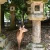 春日大社 奥の院道/本殿の南東のどんづまりに紀伊神社(奥の院)。鬱蒼とした森を縫って小道が続きます。