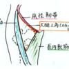 スカルパ三角の意義と語呂合わせ