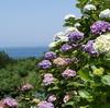 峠の紫陽花を見にいく(3)