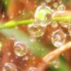 雨あがり、森の言葉の周波数。