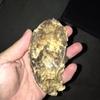 小長井の海で育った、植木水産の牡蠣はいつ食べれる?