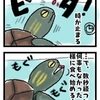 【創作漫画】カメってとっても面白い!