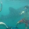 世界一周22日目 フィリピン  〜ジンベエザメと一緒に泳げる海・セブ島オスロブ〜