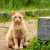 錦帯橋と吉香公園と猫