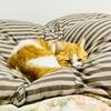 愛猫と一緒に布団の中で寝たい!