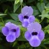 ミモザ・ガーデンの日記 花の図鑑です