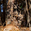 Tips To Make You A Better Deer Hunter
