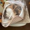 猫の地震予知