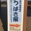つばき展(⌒▽⌒)