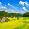 大都会大阪にある日本のふるさと能勢町の棚田