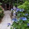 山の中!穴場感いっぱい!鎌倉・瑞泉寺であじさい散策