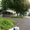 マロニエの並木道 散歩