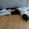 今日の黒猫モモ&白黒猫ナナの動画ー1031