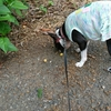 枇杷が食べられない犬。