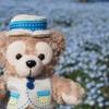 春のお出かけ:お花畑を見にひたち海浜公園へ