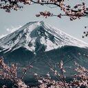 🌸日見さくらの春夏秋冬🌸