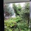 狭い庭の「巨木」たち