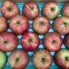 ダイエット中のりんごの食べ方