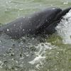 須磨水族館のイルカが海にいるぞ!須磨ドルフィンコースト