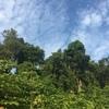 シンガポール・マイナー観光地(2):戦争記念館『シロソ砦』が伝える太平洋戦争