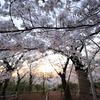 Snapshot ~『桜 2021』 #7