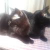 たくさんの黒猫が居るという地域