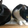 今日の黒猫モモ&白黒猫ナナの動画ー964
