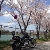 泪橋の桜の向こう側へ