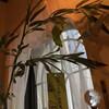 さあ、アメブロのヘッダー画像カスタムしました(^▽^&#59;)