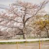 地元の桜 2021「ご近所 本番編」Ⅷ