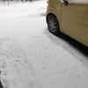 春の雪、嬉しいのは…