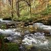 青い森で紅葉と飲み食い倒れ その4 奥入瀬渓流
