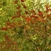 伴走母から見た秋/part12。