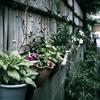 真夏の旅行中、家の鉢植えが干からびないためには、こんな風にしておくっていう手もありますよ。