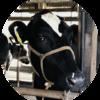 栃木の牛たちに会いに行きました
