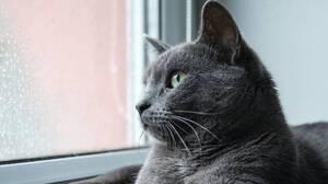 文学の古典で英語の読解力を付けよう!ヘミングウェイ「雨のなかの猫」を読む