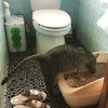 コストパフォーマンス重視で猫のシステムトイレの檜チップをクリーンミューにしてみたよ