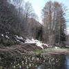 「遥かな尾瀬」をプチ体験するなら、ミニ尾瀬公園がオススメ
