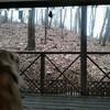 長野で鹿と鳥がやってきた