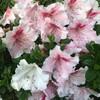 6月26日(金)雑草に負けそう、梅雨時の雑草はグングン伸びる、