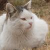 2月5日 荒川土手の猫さまたち とその情景