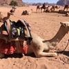 ヨルダン・ワディラム砂漠でおすすめの格安ツアー!Wi-Fi付きのキャンプ泊で星空と料理も楽しめる