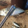 冬の堤防サビキ釣り!冬でもアジが釣れる場所と冬良く釣れる時間帯!