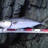 インプレ! タカミヤ ショアジギングGR2 98MHは地磯で使えるロッドか?実釣検証。地磯で63cmのハマチ。